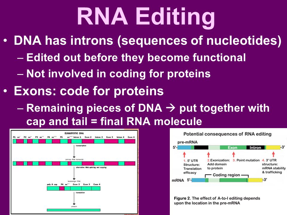 RNA Editing DNA has introns (sequences of nucleotides)