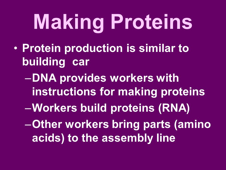 Making Proteins Protein production is similar to building car