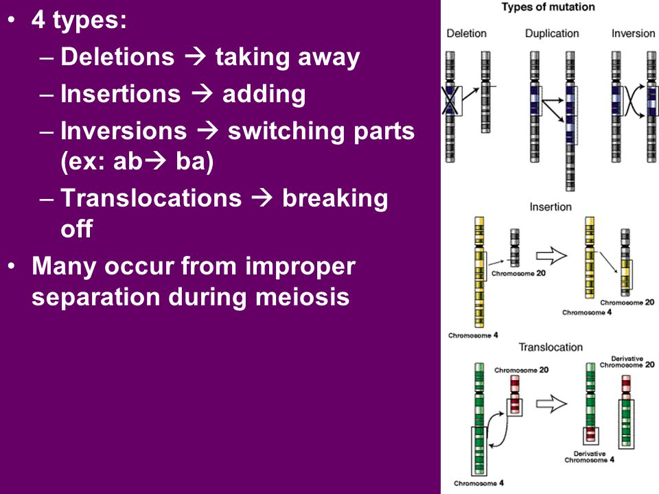 4 types: Deletions  taking away. Insertions  adding. Inversions  switching parts (ex: ab ba) Translocations  breaking off.