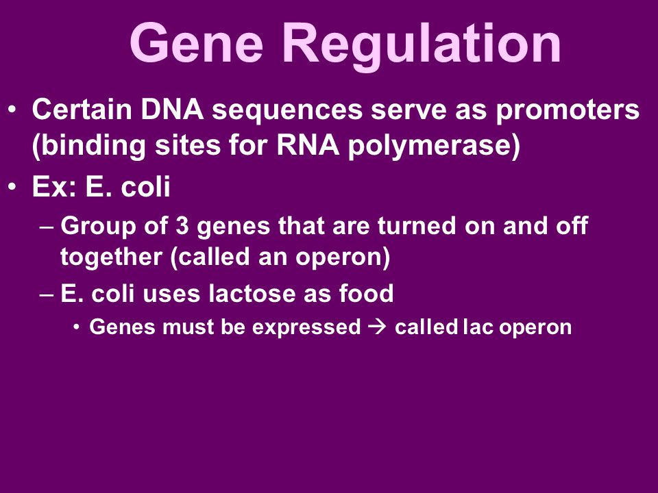 Gene Regulation Certain DNA sequences serve as promoters (binding sites for RNA polymerase) Ex: E. coli.