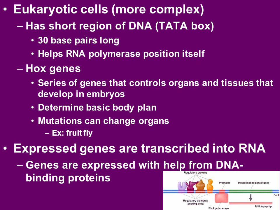 Eukaryotic cells (more complex)