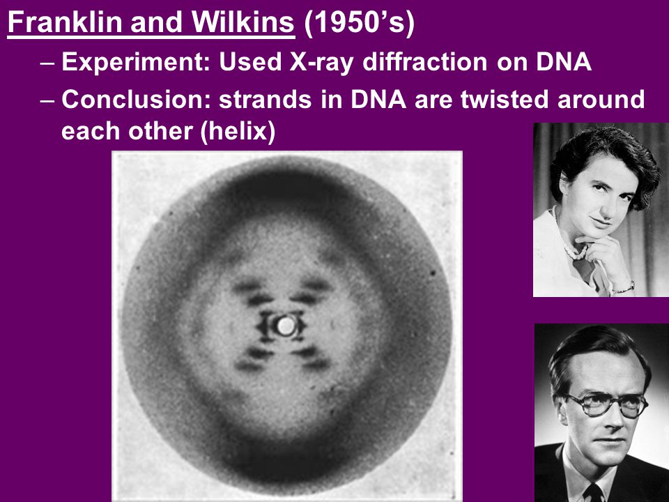 Franklin and Wilkins (1950's)