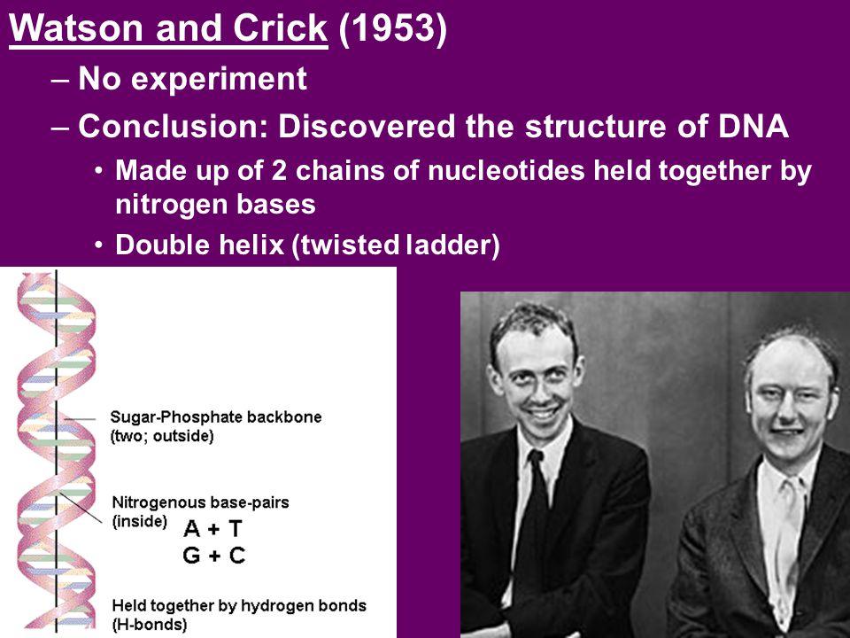 Watson and Crick (1953) No experiment