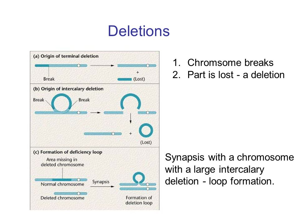 Deletions Chromsome breaks Part is lost - a deletion