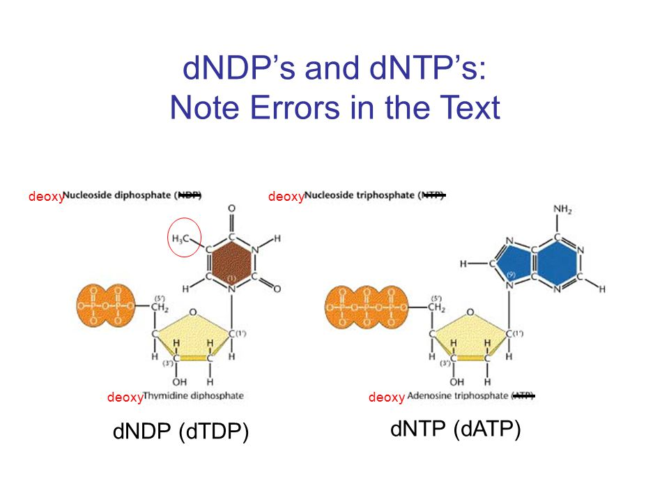 dNDP's and dNTP's: Note Errors in the Text