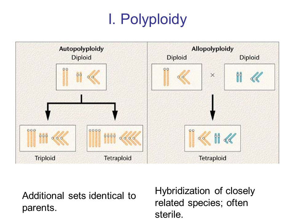 I. Polyploidy Hybridization of closely related species; often sterile.