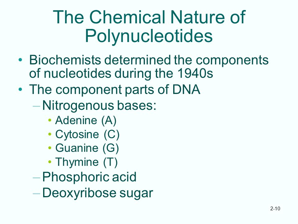 The Chemical Nature of Polynucleotides