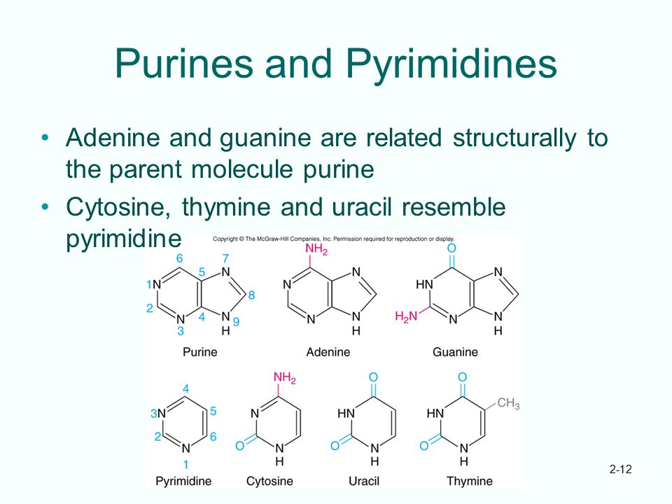 Purines and Pyrimidines
