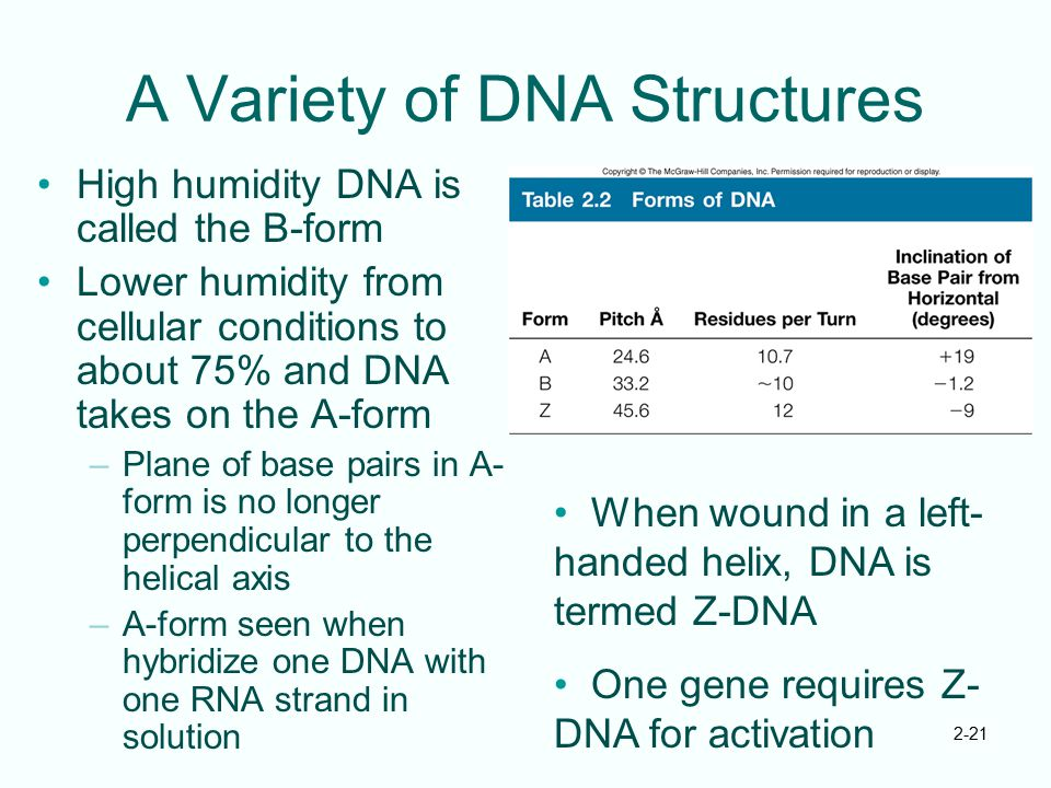 A Variety of DNA Structures