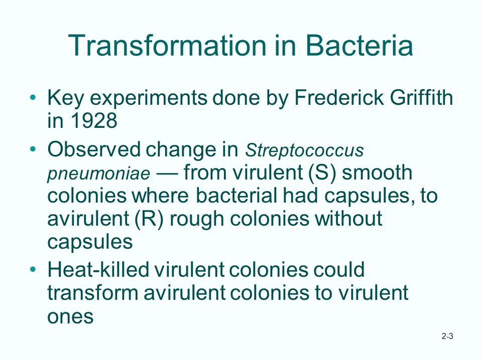Transformation in Bacteria