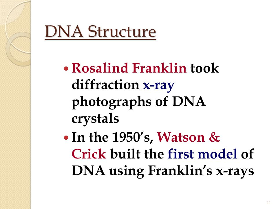 DNA Structure Rosalind Franklin took diffraction x-ray photographs of DNA crystals.