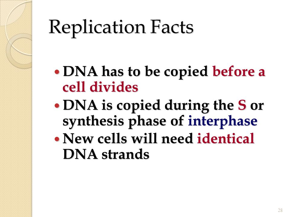 Replication Facts DNA has to be copied before a cell divides