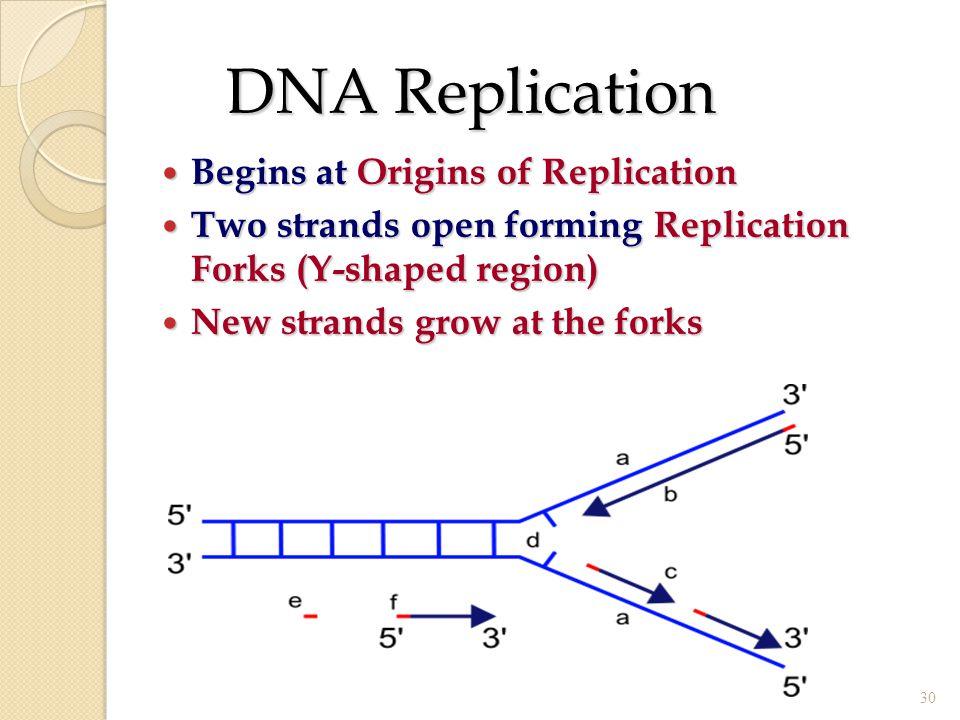 DNA Replication Begins at Origins of Replication