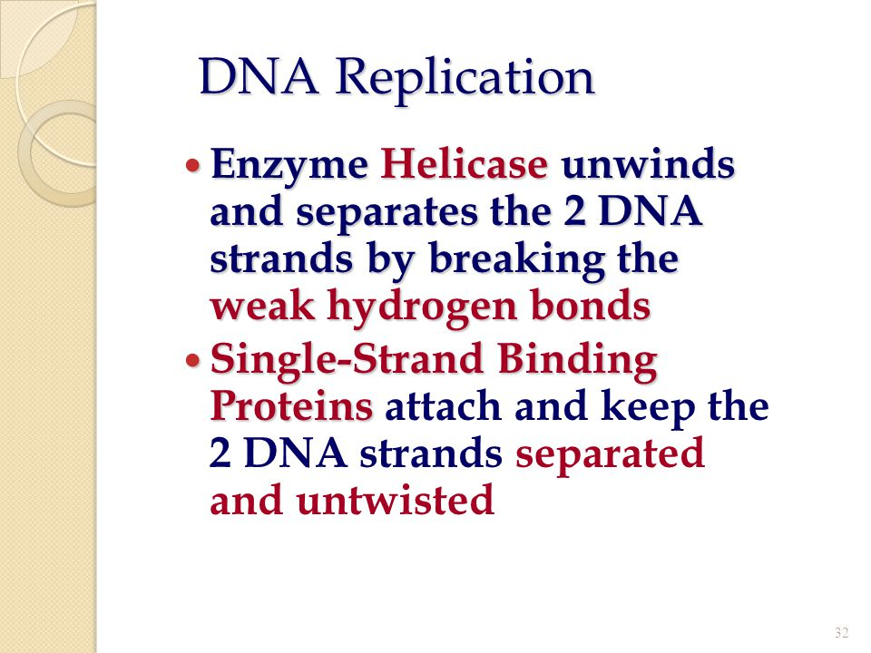DNA Replication Enzyme Helicase unwinds and separates the 2 DNA strands by breaking the weak hydrogen bonds.