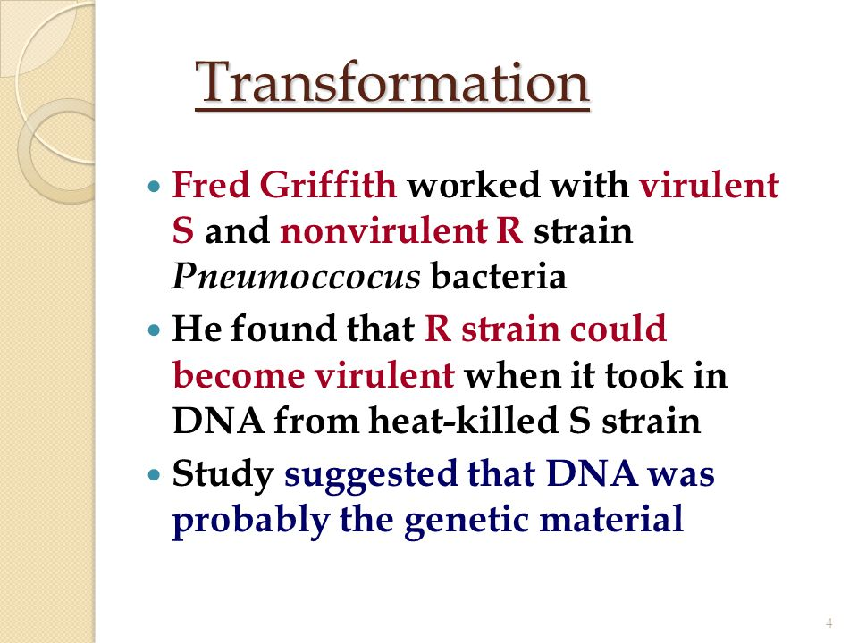 Transformation Fred Griffith worked with virulent S and nonvirulent R strain Pneumoccocus bacteria.