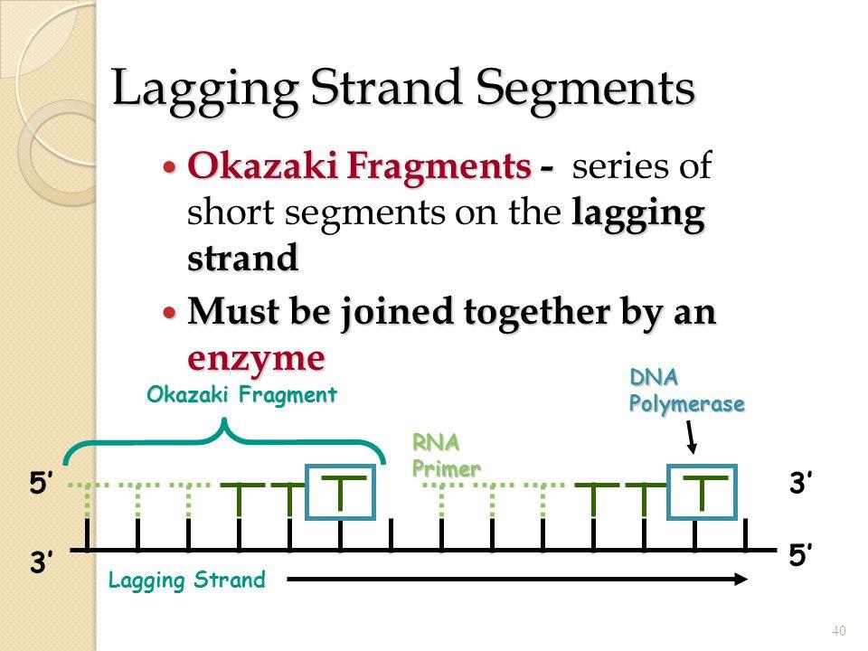 Lagging Strand Segments