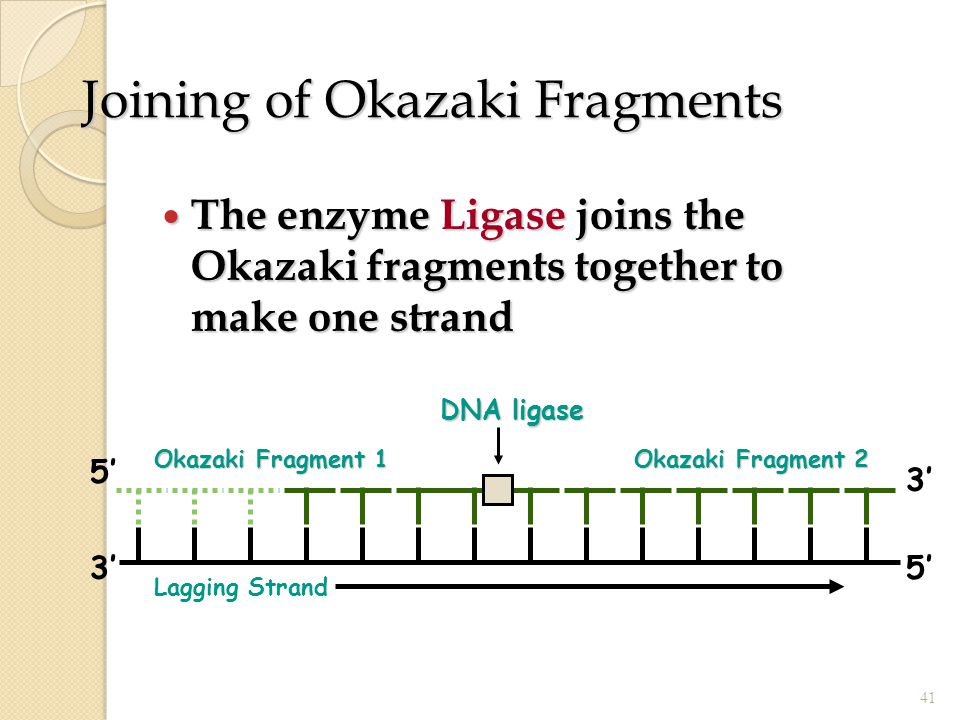 Joining of Okazaki Fragments