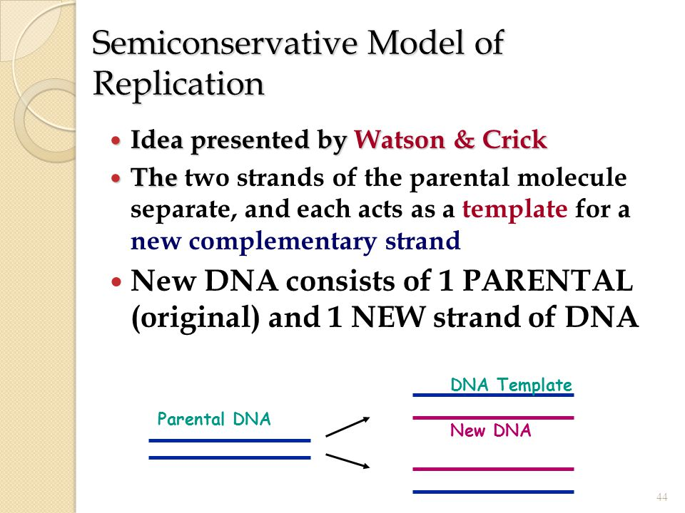 Semiconservative Model of Replication