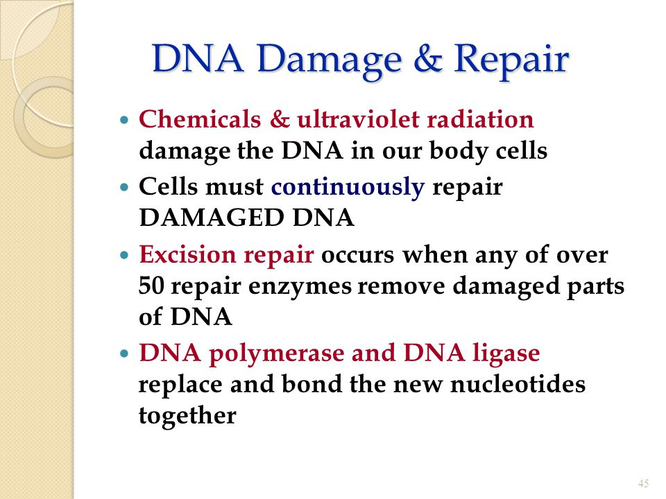 DNA Damage & Repair Chemicals & ultraviolet radiation damage the DNA in our body cells. Cells must continuously repair DAMAGED DNA.