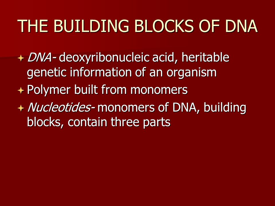 THE BUILDING BLOCKS OF DNA