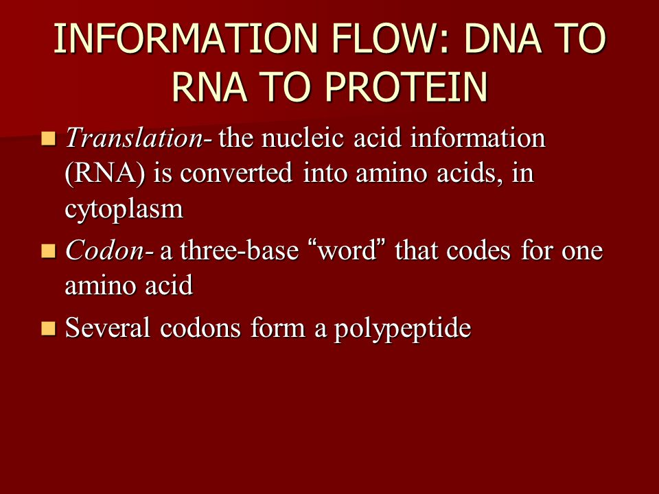 INFORMATION FLOW: DNA TO RNA TO PROTEIN