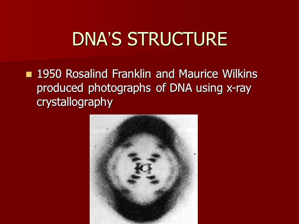 DNA'S STRUCTURE 1950 Rosalind Franklin and Maurice Wilkins produced photographs of DNA using x-ray crystallography.