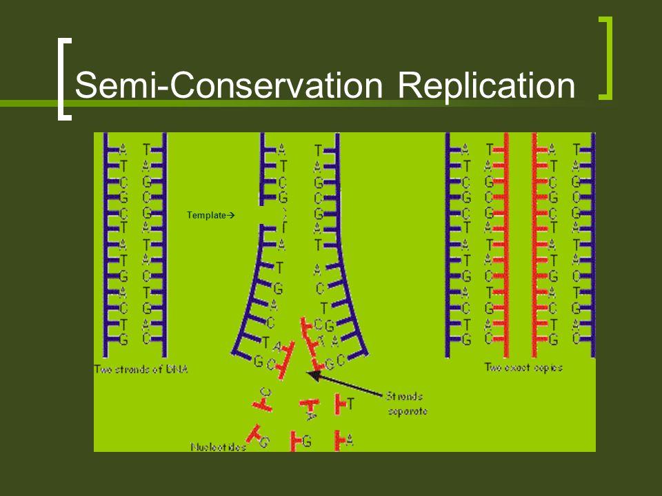 Semi-Conservation Replication
