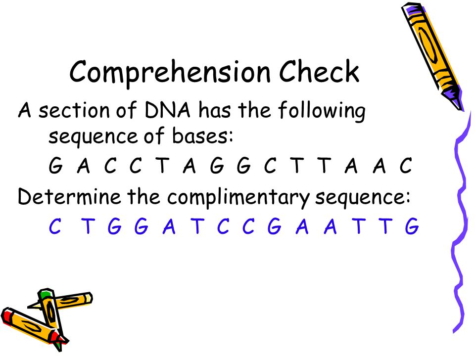 Comprehension Check A section of DNA has the following sequence of bases: G A C C T A G G C T T A A C.