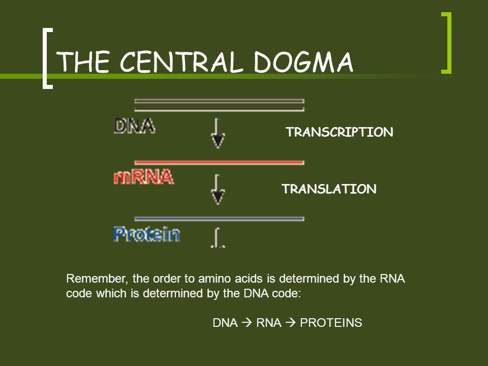 THE CENTRAL DOGMA TRANSCRIPTION TRANSLATION