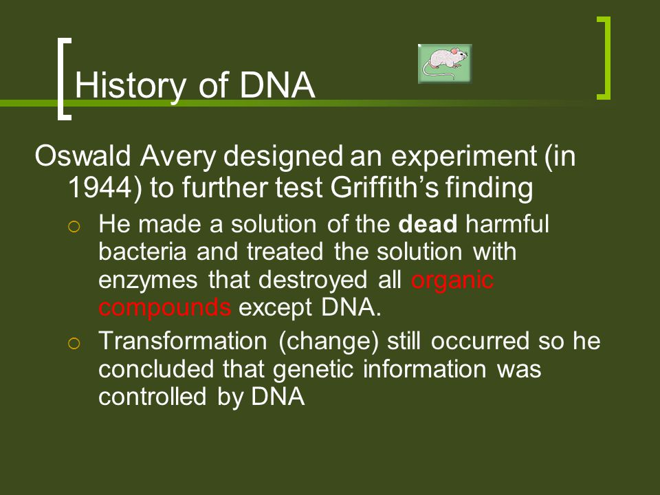 History of DNA Oswald Avery designed an experiment (in 1944) to further test Griffith's finding.