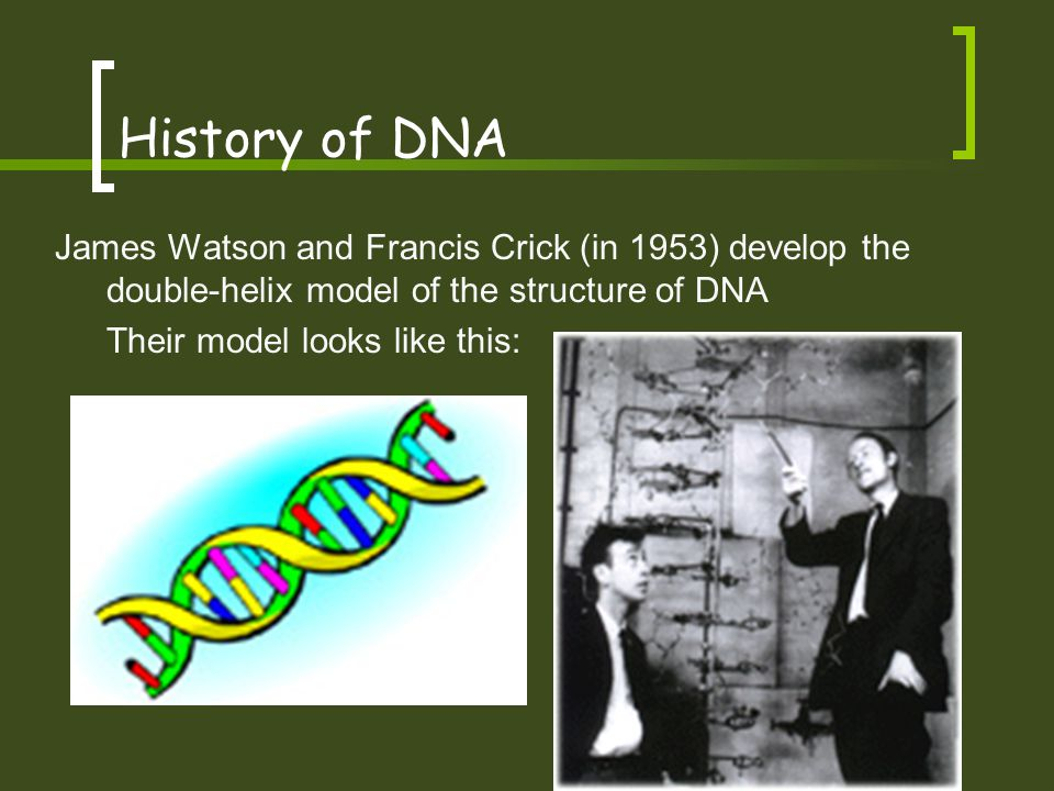 History of DNA James Watson and Francis Crick (in 1953) develop the double-helix model of the structure of DNA.