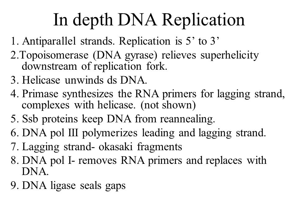 In depth DNA Replication