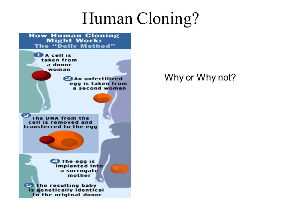 Human Cloning Why or Why not