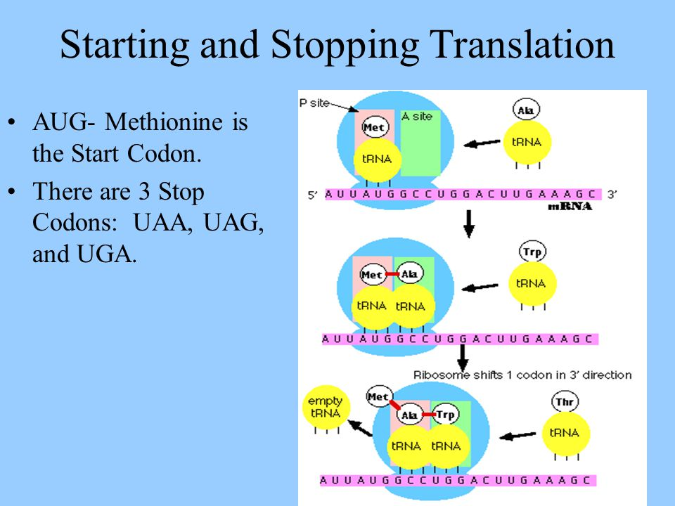 Starting and Stopping Translation