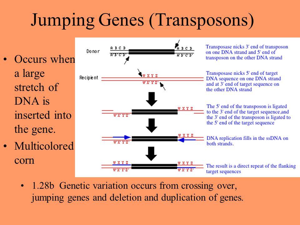 Jumping Genes (Transposons)