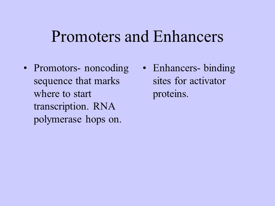 Promoters and Enhancers
