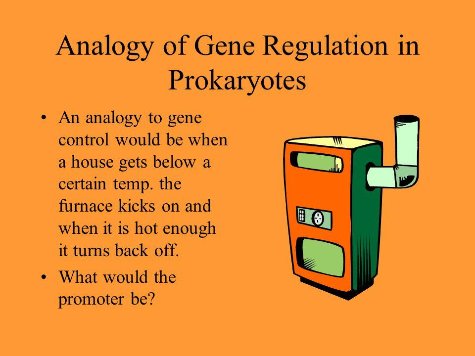 Analogy of Gene Regulation in Prokaryotes