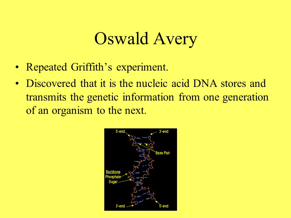 Oswald Avery Repeated Griffith's experiment.