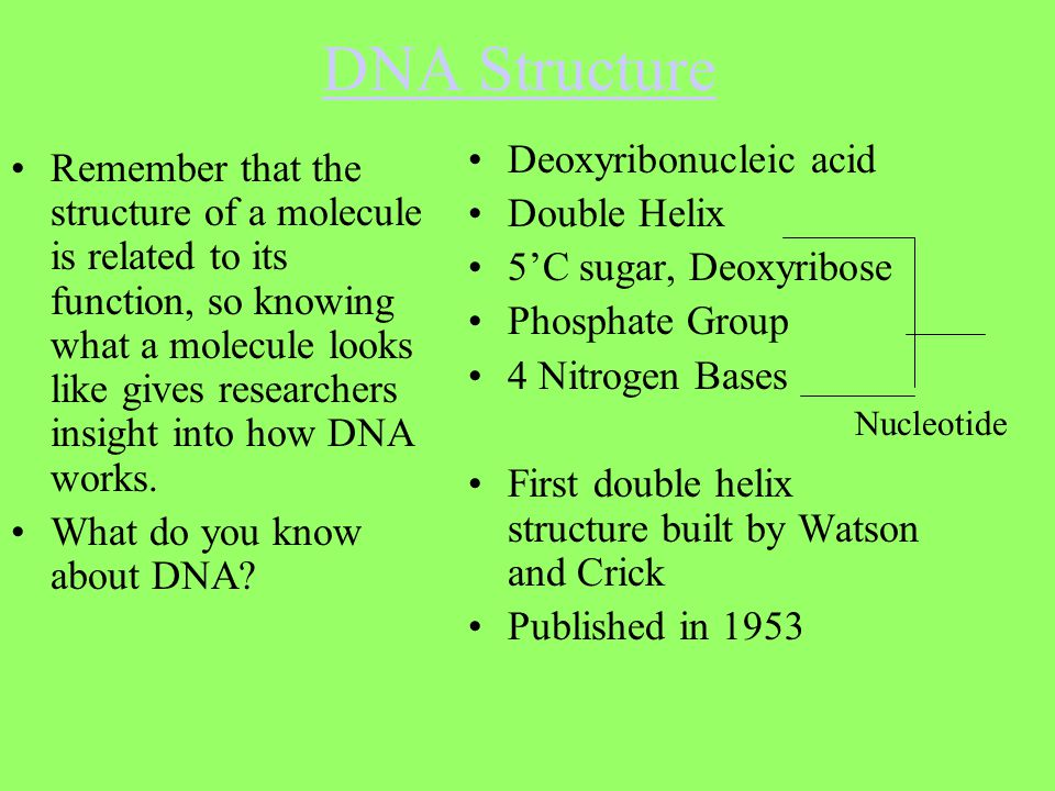DNA Structure Deoxyribonucleic acid