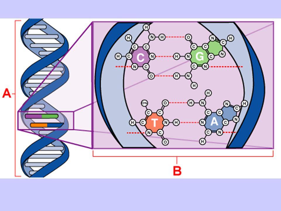 genetics.nbii.gov/ Basic1.html