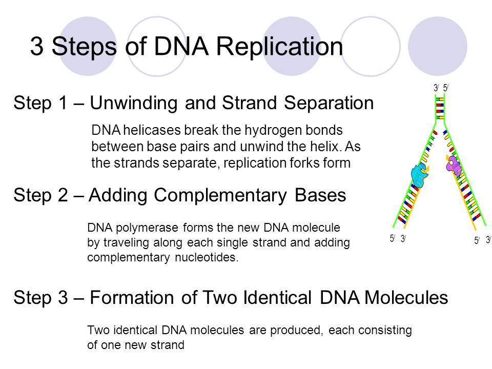 steps and process of dna The steps of dna fingerprinting dna fingerprinting involves a number of intensive and important steps in order to fully complete and develop and dna fingerprint of a.
