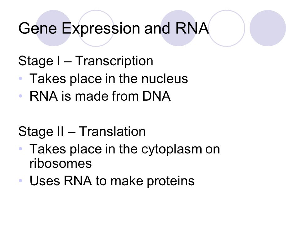 Gene Expression and RNA