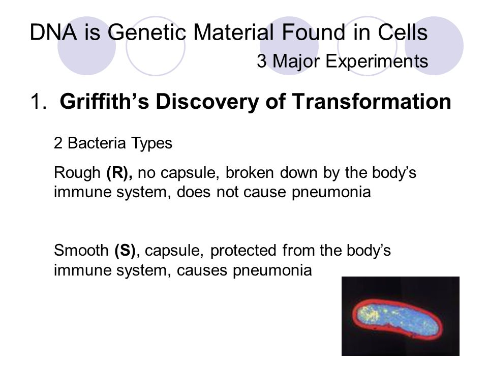 DNA is Genetic Material Found in Cells 3 Major Experiments