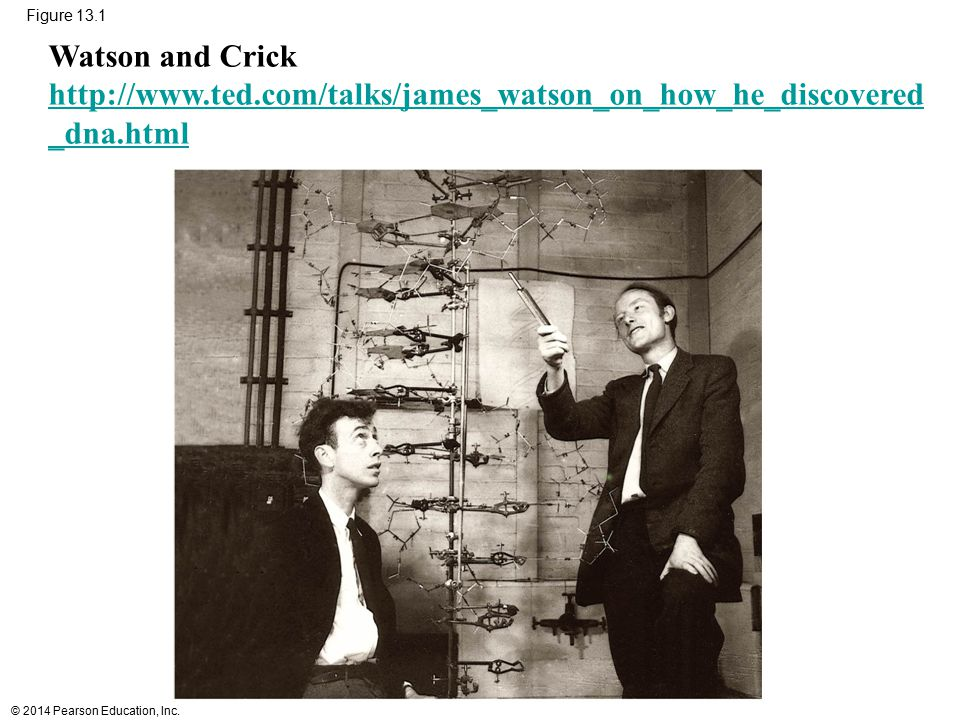 Figure 13.1 Watson and Crick. http://www.ted.com/talks/james_watson_on_how_he_discovered_dna.html.