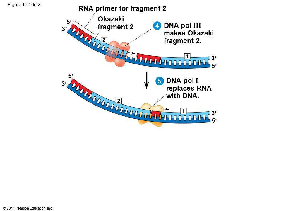 RNA primer for fragment 2
