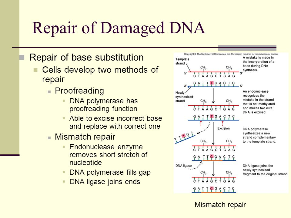 Repair of Damaged DNA Repair of base substitution