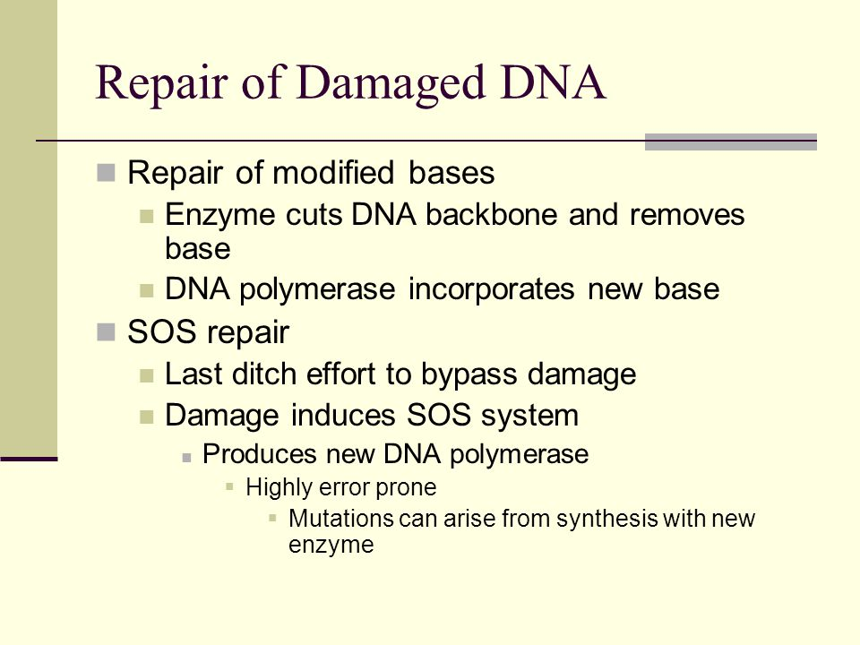 Repair of Damaged DNA Repair of modified bases SOS repair