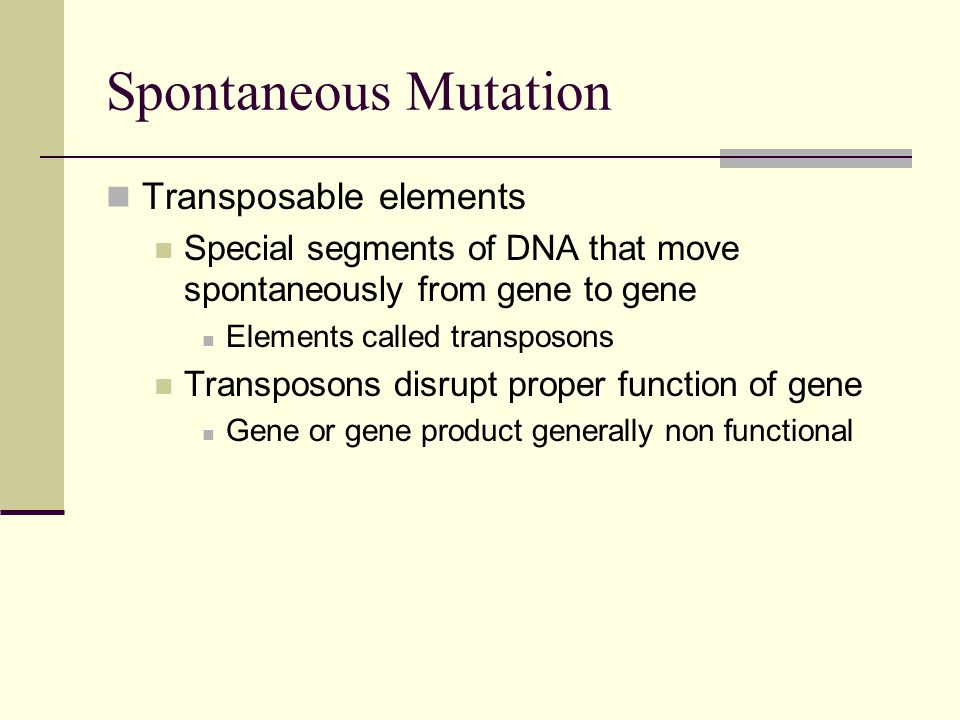 Spontaneous Mutation Transposable elements