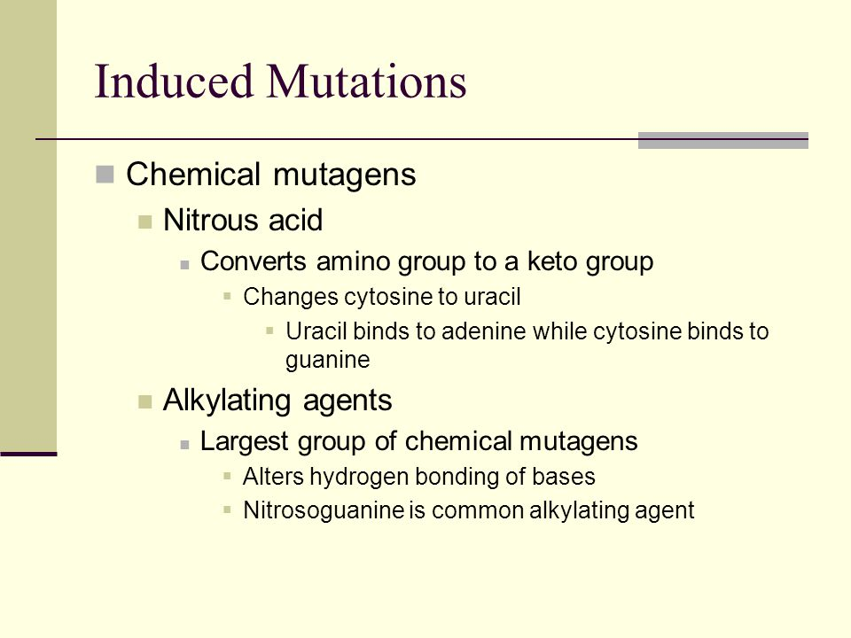 Induced Mutations Chemical mutagens Nitrous acid Alkylating agents