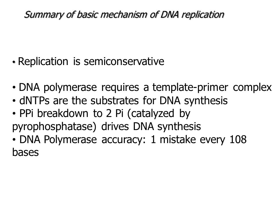 DNA polymerase requires a template-primer complex